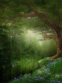 Le TDAH et les objectifs : la forêt versus les arbres